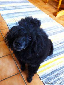 ホストファミリー宅の犬