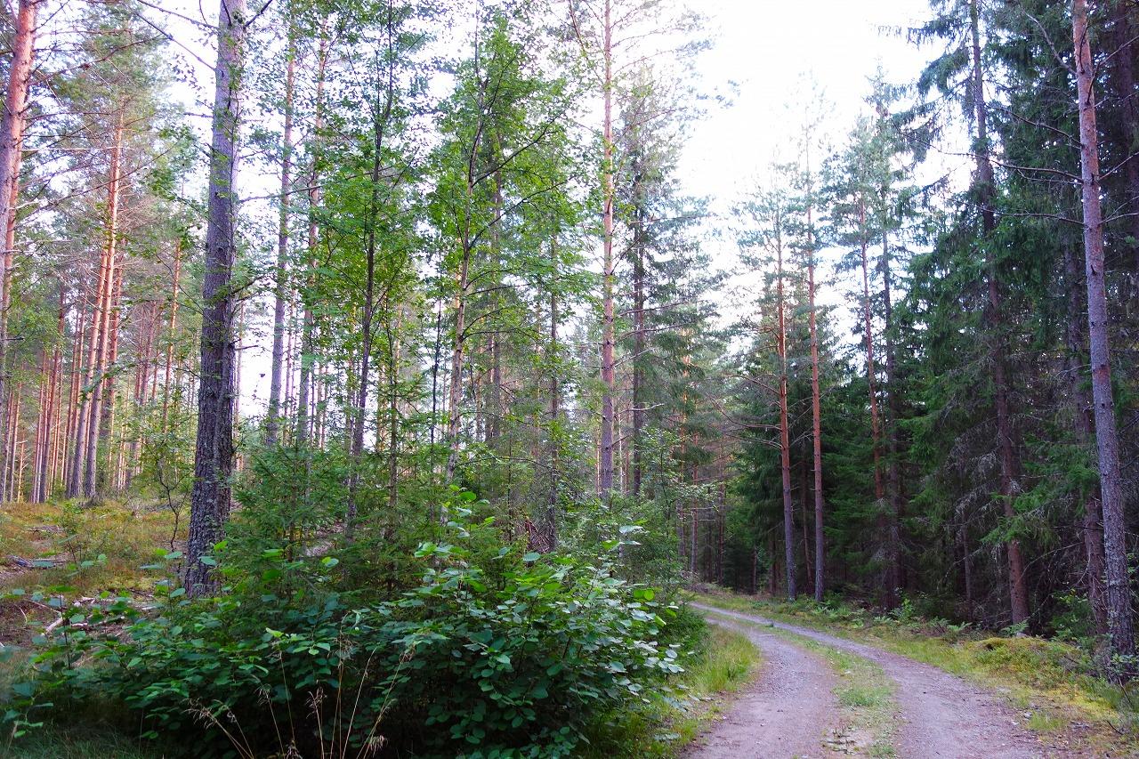 ヴァルムランドのArvikaの森